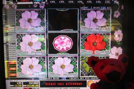 WILD ROSES THE GARDEN 4×8 161,000枚