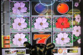 WILD ROSES THE GARDEN 4×8 238,875枚