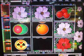 WILD ROSES THE GARDEN 4×8 50,250枚