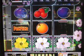 WILD ROSES THE GARDEN 4×8 45,900枚