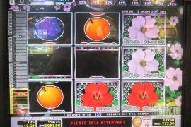 WILD ROSES THE GARDEN 4×8 59,875枚