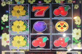 WILD ROSES THE MULTI GARDEN 122,000枚