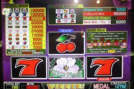 WILD ROSES 96,000枚