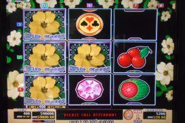 WILD ROSES THE MULTI GARDEN 598,000枚
