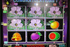 WILD ROSES 146,300枚