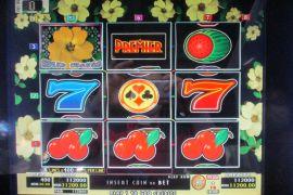 WILD ROSES THE MULTI GARDEN 112,000枚